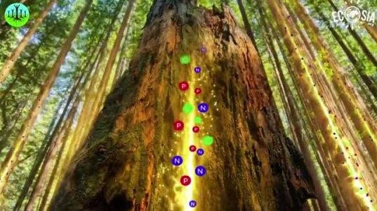 რატომგანაგრძობს  სიცოცხლეს  ხის  მორი - საოცარი ფაქტები